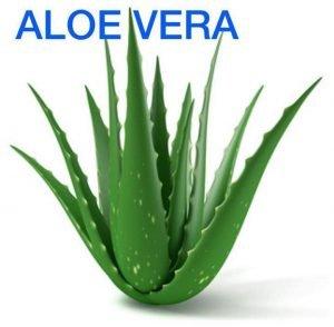 Le piante che si possono tenere in camera da letto per - Piante che si possono mettere in camera da letto ...