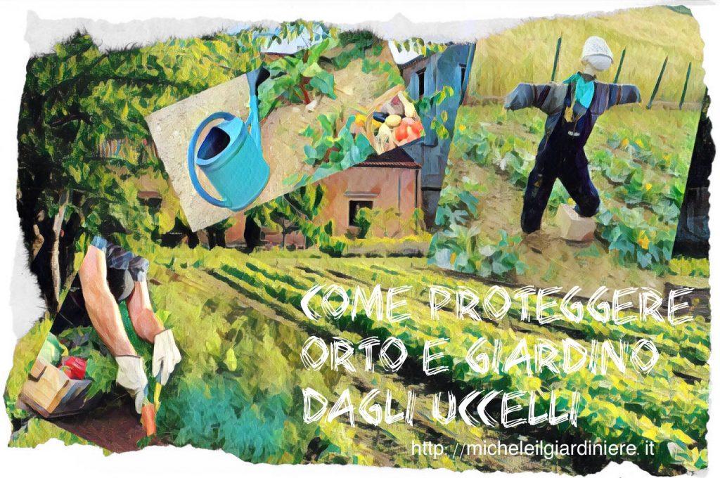 Se gli uccelli danneggiano il nostro orto michele il giardiniere - Allontanare i gatti dal giardino ...